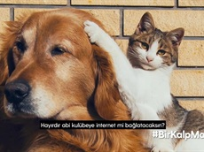 Turkcell Mağazalarında Sevimli Dostlarımıza #BirKalpMama!